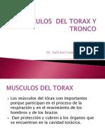 Musculos Del Torax y Tronco