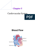 Chapter 5 Slides - Cardiovascular and Lymphatic Systems. exam krackers. mcat review.