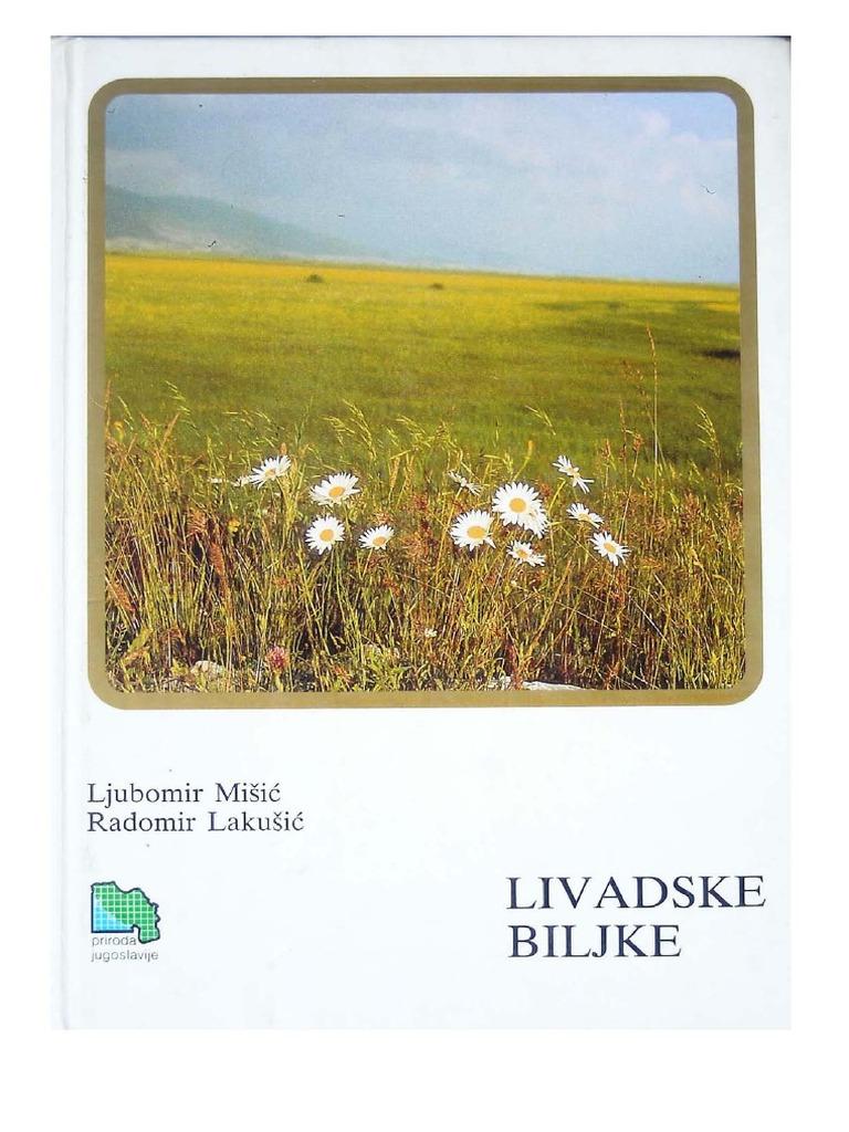 Lutti pascolo 80-100cm Salix Alba