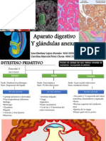 Sistema Digestivo Embriologia