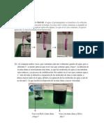 Resultado Laboratorio Permeabilidad Biología 14 Mayo