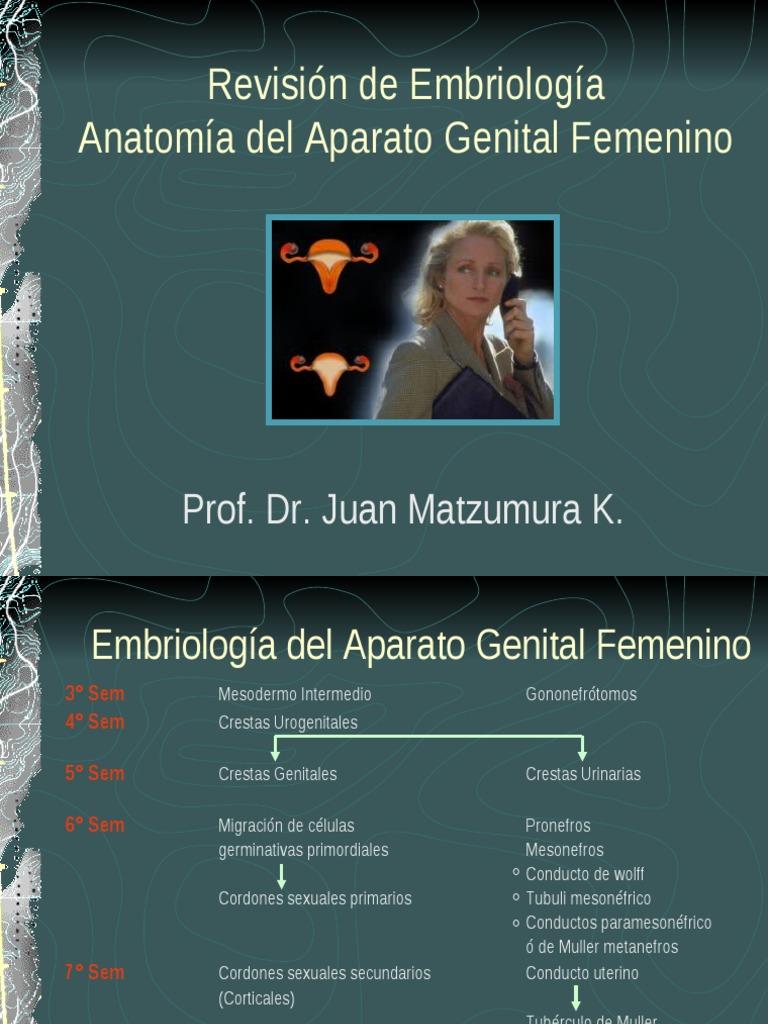 Sesion 01 Revision Embriología -Anatomia