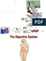 Digestive.system