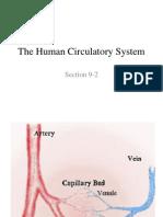Human.circulatory.system2014
