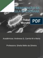 Representação Da Célula Bacteriana