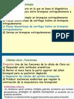 Pgtas de Histología