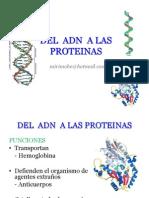 8. DEL ADN A LAS PROTEINAS-ARN.pdf