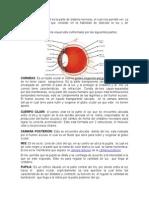 El sistema visual.doc