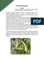Plantas de Huacachina