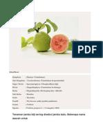 Makalah Metabolisme Primer Dan Sekunder Jambu Biji
