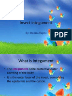 Insect Integument