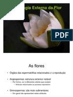 Morfologia Externa Da Flor