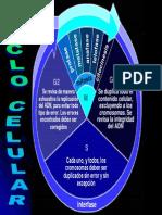 2_4_ciclocelular