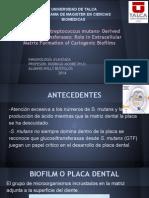 Seminario Inmunologia Streptococo GTFs
