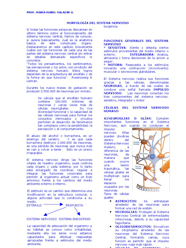 Dorable Opinión De Hoja 13 De La Neurona Anatomía Y Fisiología ...