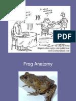 Frog Anatomy 1