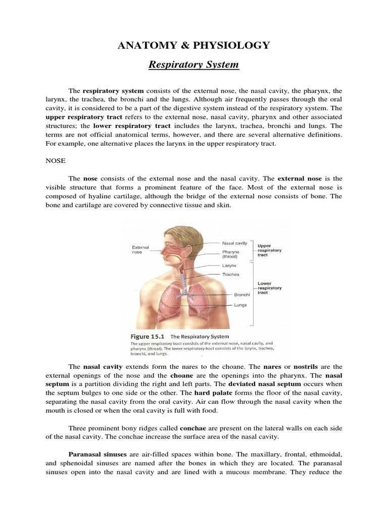 ANATOMY of Pneumonia | Larynx | Lung