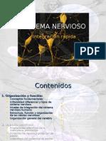 Apuntes de Sistema Nervioso- Uac Valdivia