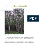 The Rubber Tree