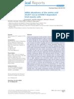 Insulin Increases MRNA Abundance of the Amino Acid Transporter SLC7A5-LAT1