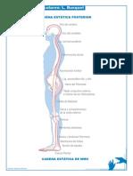 Busquet - Cadenas Musculares
