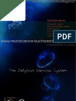Jellyfish Nervous System