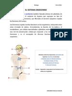 El Sistema Endocrino