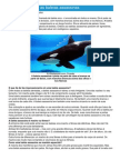 Orcas - Ficha do Animal - Como funcionam as baleias assassinas