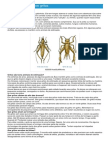 Grilos - Ficha do Inseto - Como funcionam os grilos