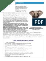 Elefante - Ficha do animal - Como funcionam os elefantes.