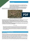 Morsas - Ficha da Pinnepedia - Como funcionam as morsas.