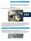 Jacarés e Aligatores - Ficha do Réptil - Como funcionam os jacarés e aligatores.