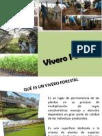 3.Clase.qué Es Un Vivero Forestal