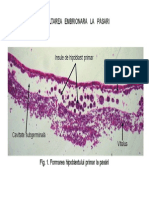 LP 4 - Embriologie Pasari Mamifere