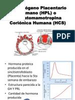 El Lactógeno Placentario Humano (HPL) y PREECLAMPSIA