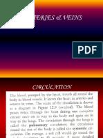 Arteries & Veins, IGCSE, Biology