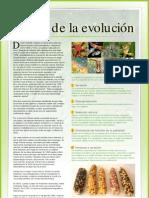 14__teoría de la evolución