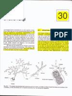 Guia de Lectura 5. Reino Fungi