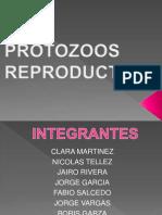 PROTOZOOS REPRODUCTIVOS[1].pptx