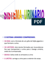 97172370-Sistema-Urinario.pptx