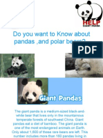 Do You Want to Know About Pandas ,And Polar Bears?