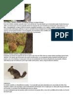 Animales Originarios de Chile