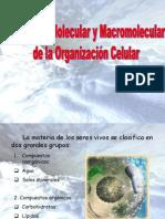 Estructura Molecular y Macromolecular Celular