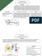Tejido nervioso, presentacion para Biologia Humana..doc