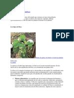 Biodiversidad de Flora