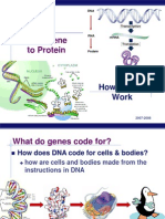61 Gene to Protein 2008