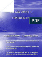 BACILOS GRAM (+)
