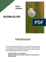 Cría de Caracoles Comestibles Terrestres-001