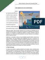 Flujo de Energía en Los Ecosistemas Tema3