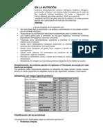 LAS PROTEÍNAS EN LA NUTRICIÓN.docx